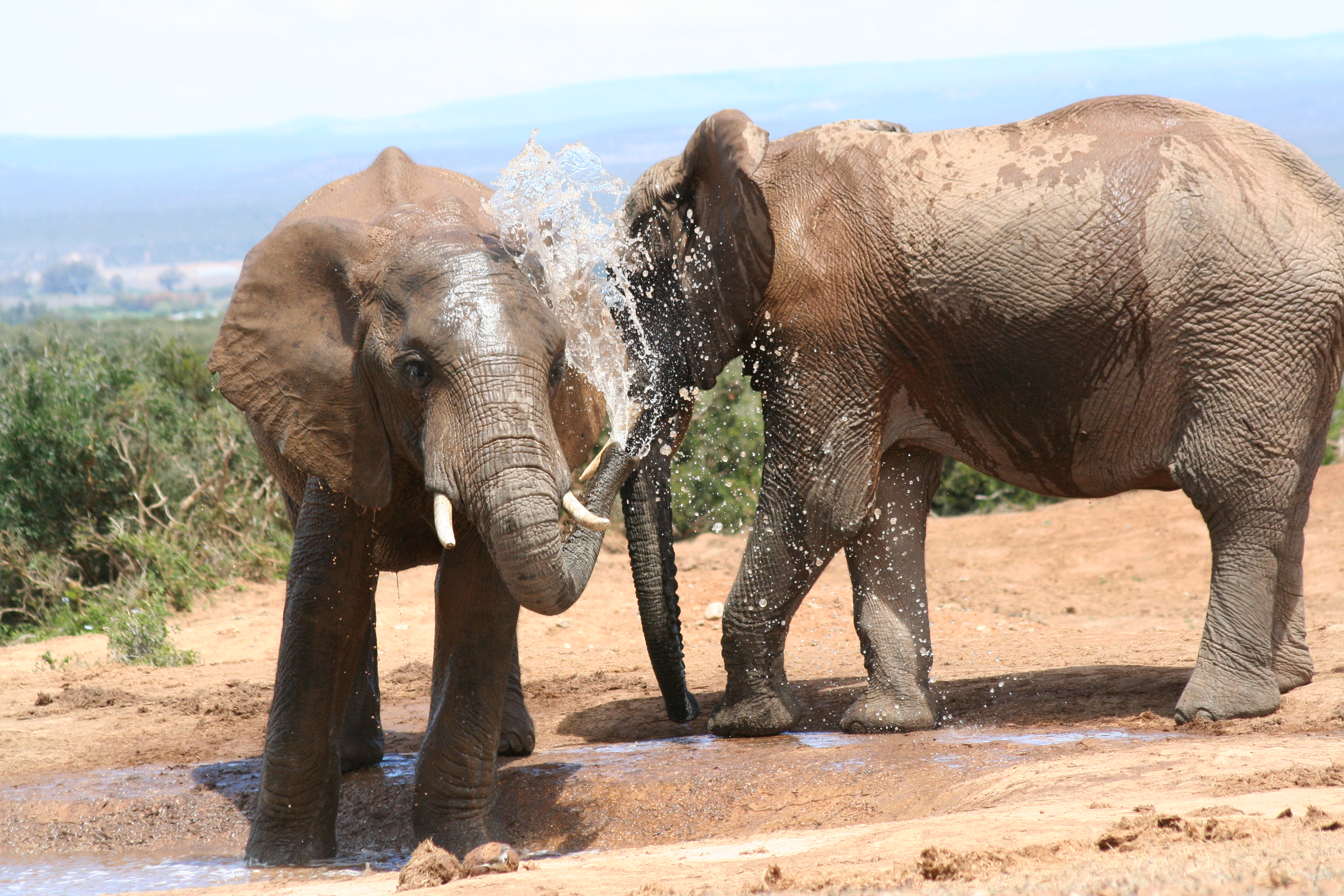 Addo Elephant National Park, South Africa - bath time