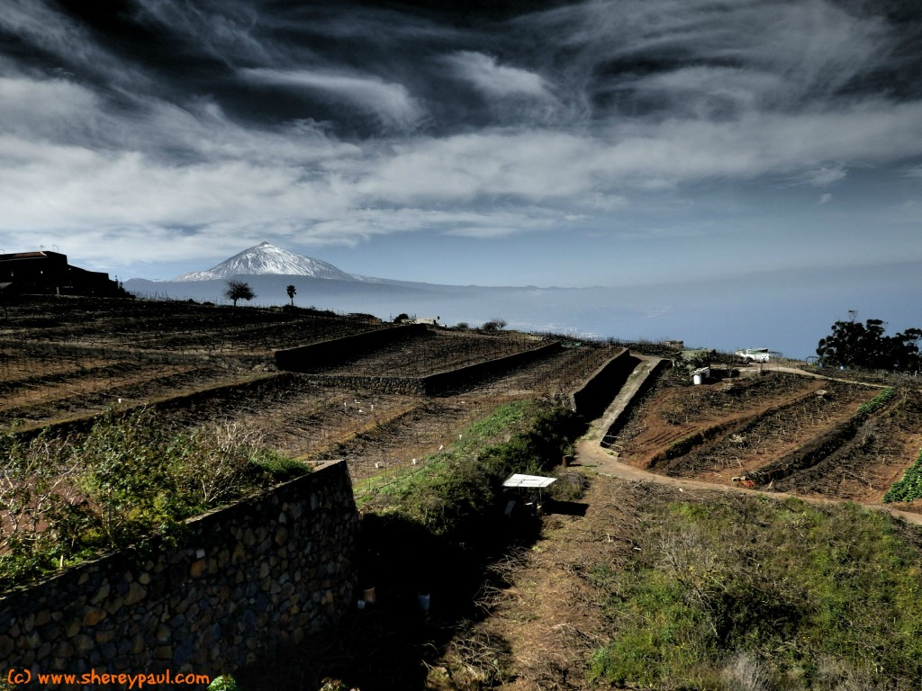 View of El Teide from Bodegas Monje