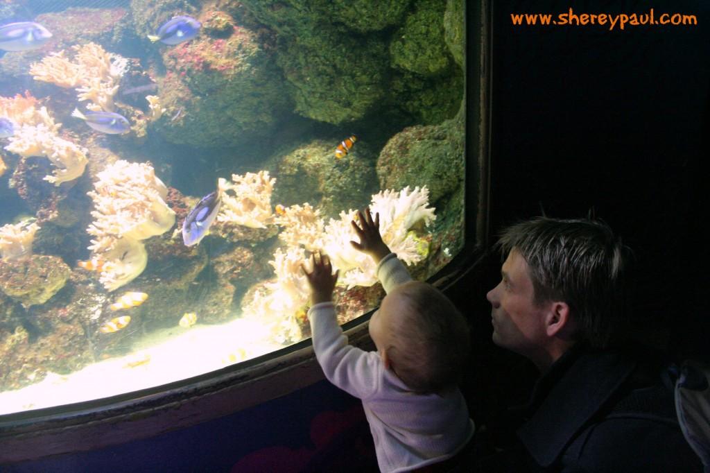sea life aquarium: Nemo's coral caves