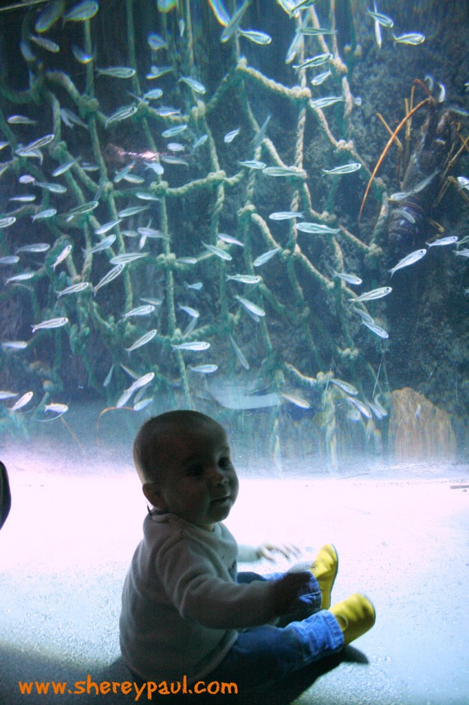 london with kids: sea life aquarium