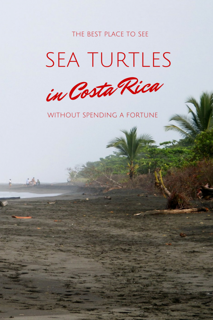 The best place to see sea turtles in costa Rica - Parismina