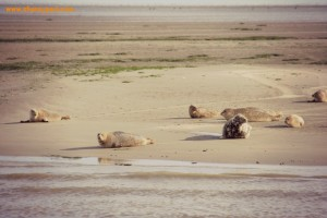 #BELM15: what to do around Lauwersmeer with kids