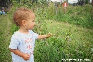 AtoZ Friesland with kids: picking berries at fruithof de struikrover