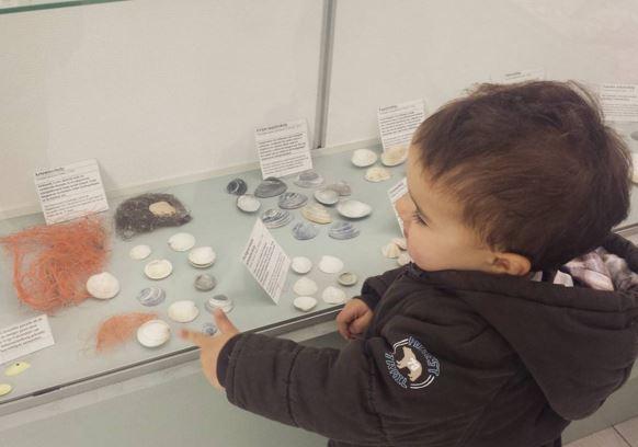 Schier shell museum