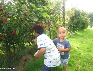 Where to pick blackberries in Friesland