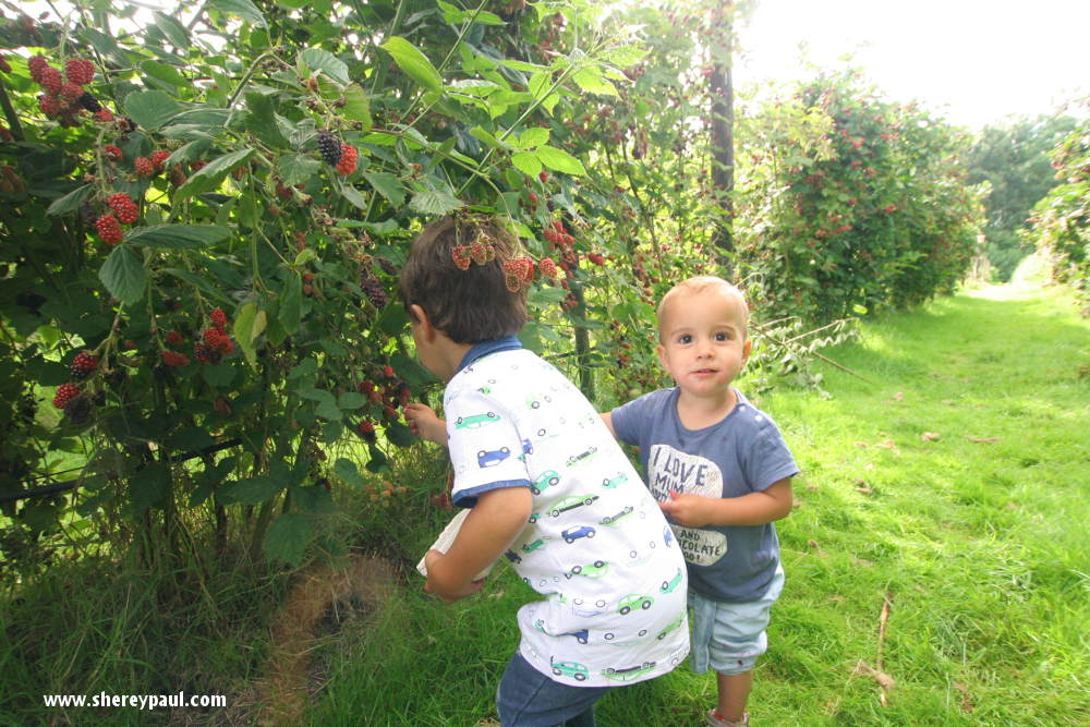 Where to pick blackberries in Friesland: fruithof de struikrover