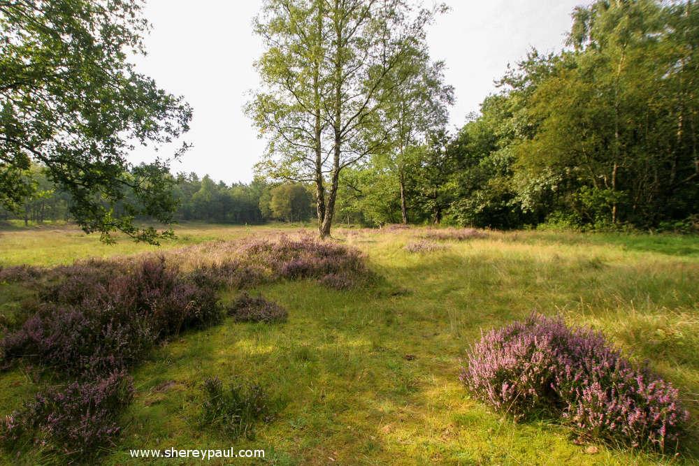 Duurswouder Heide