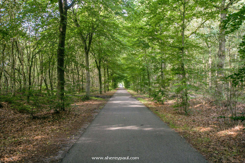 Bike path to Duurswouder Heide