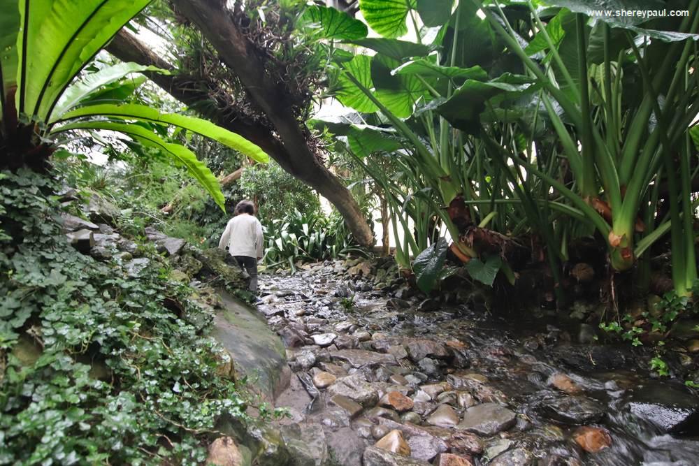 Orchideeën Hoeve met kinderen: Het Amazone Regenwoud