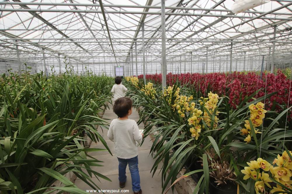 Orchideeën Hoeve met kinderen:  welke kleur Orchidee vind je het mooiste?