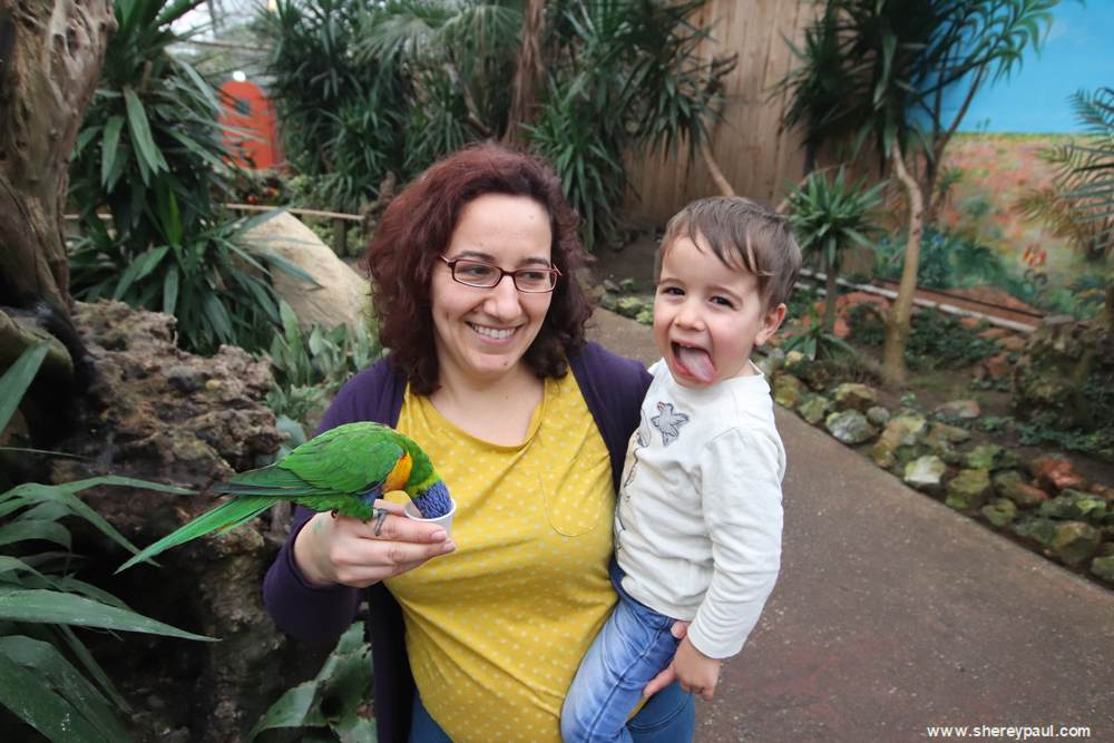 Orchideeën Hoeve met kinderen: Lorituin
