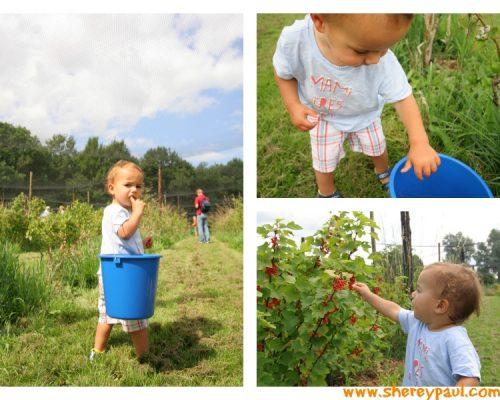 Where to pick blackberries in Friesland