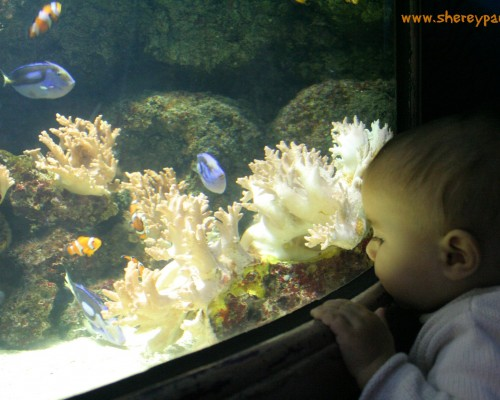 With Nemo and Dory at the Sea life London - ww